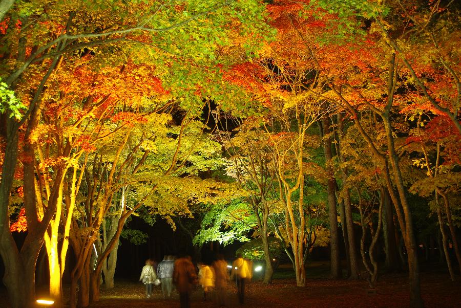 函館10月紅葉
