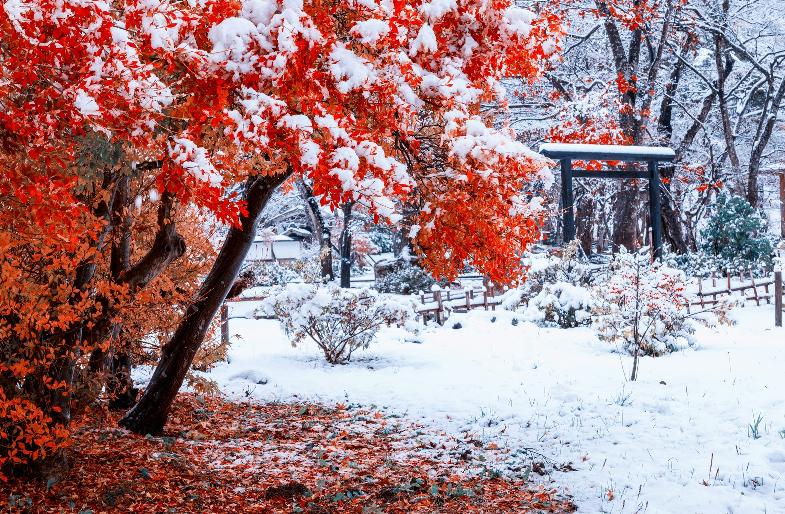 紅葉と冠雪